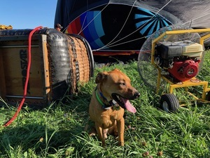 dog and hot air balloon faq